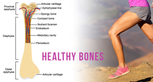 Strengthen Your Bones